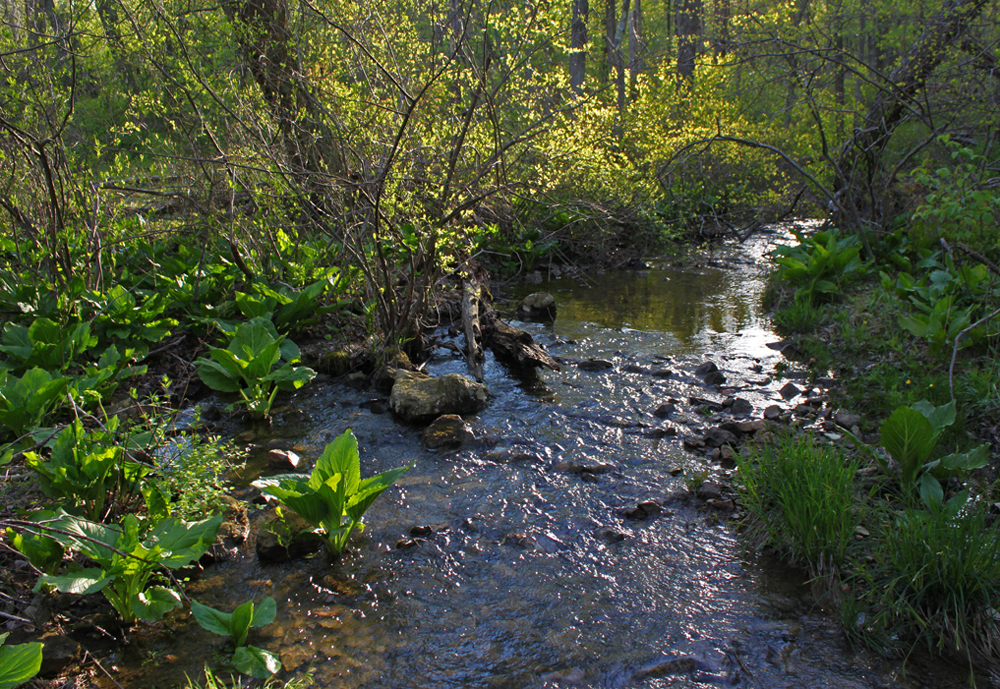 creekspringgreen