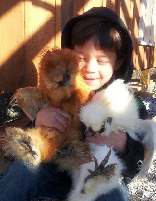 boyandchickens500w
