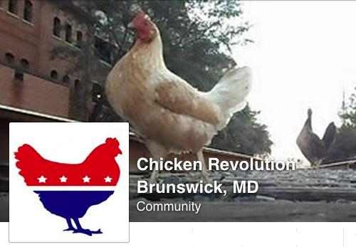 chickenrevolutionFB500w