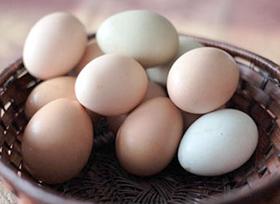 eggs280w