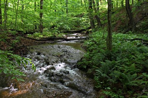 creekcascadesferns500w