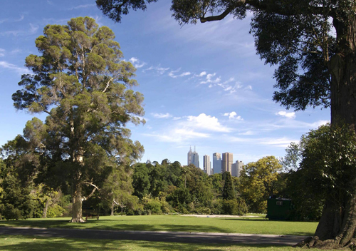 Live in a city? The take time to walk in the city's parks and gardens such as Melbourne's Botanical Gardens. (Flickr/Stephen Barber)