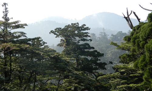 Bathe yourself in the forests of Japan's Yakushima island. (Alan Logan)