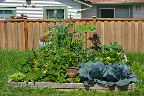 backyardgardenbed500w