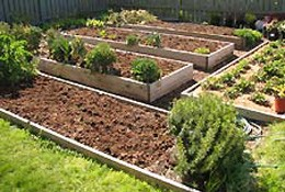 Cultivating Backyard Gardens