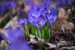 Walking from Winter into Spring in photos by Dennis Crews