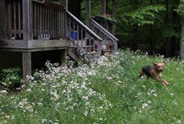 Reprise: Native plants better, cheaper than lawns