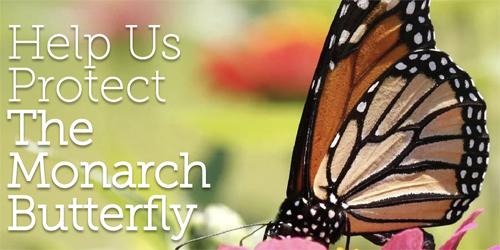 help the Monarch Alliance